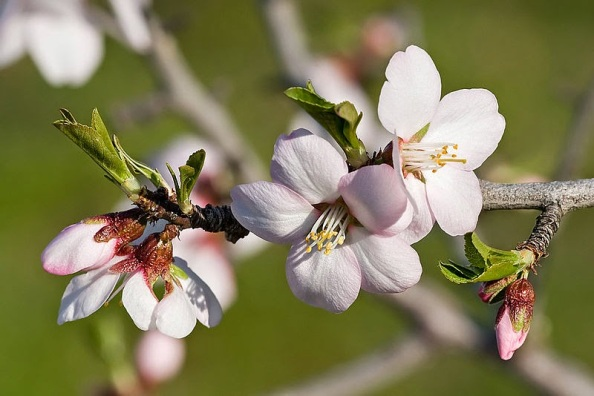 Image result for blossoming rod branch